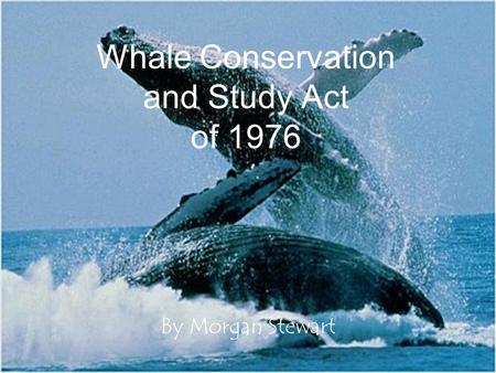 Whale Conservation and Study Act of 1976 By Morgan Stewart.
