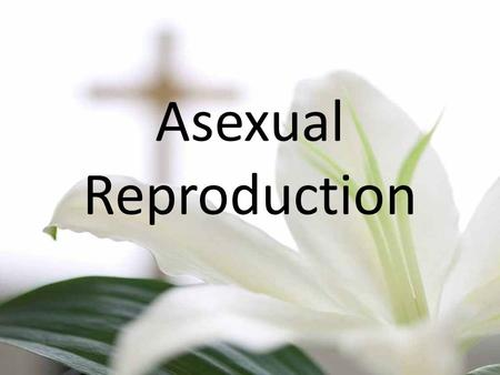 Asexual Reproduction. Plant A Top of plant cut off An example would be a carrot Called a 'plant cutting'