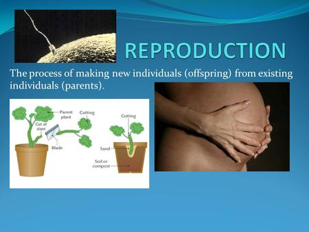 The process of making new individuals (offspring) from existing individuals (parents).