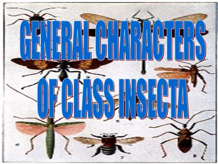 GENERAL CHARACTERS OF CLASS INSECTA.