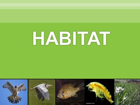 HABITAT.  Habitat  River  Wetland  Sediment  Pollution  Organism  Population  Community  Ecosystem  Native  Invasive.