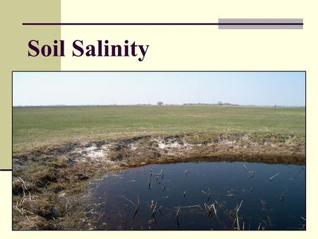 Soil Salinity. Increased amount of soluble salt in soil solution in soil Soil Salinity Affects: Soil physico-chemical properties Biological soil properties.