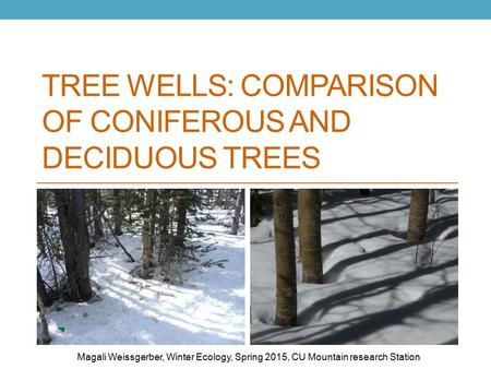 TREE WELLS: COMPARISON OF CONIFEROUS AND DECIDUOUS TREES Magali Weissgerber, Winter Ecology, Spring 2015, CU Mountain research Station.
