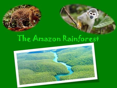 The Amazon Rainforest. Size 2,123,562 sq mi or 1.4 billion acres (Rainforest) 3,119,884.69 square miles (U.S.)
