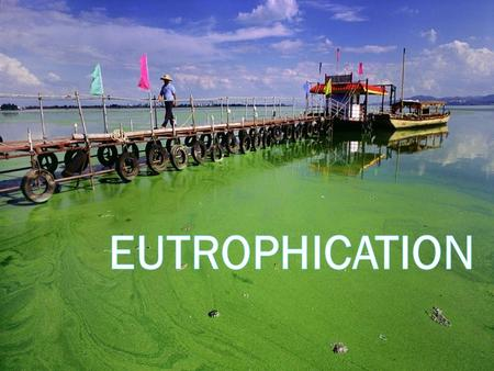 Vocabulary:  Eutrophication: is a natural process; where lakes, as they age, build up nutrients which cause phytoplankton to grow.  Phytoplankton: Microscopic.