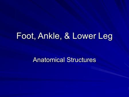 Foot, Ankle, & Lower Leg Anatomical Structures. Foot and Ankle Overview Bones: –Tibia (Medial Malleolus) –Fibula (Lateral Malleolus) –Tarsals TalusCalcaneusNavicularCuboid.