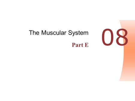 The Muscular System Part E