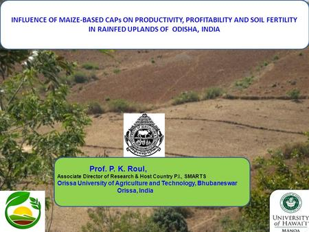 1 INFLUENCE OF MAIZE-BASED CAPs ON PRODUCTIVITY, PROFITABILITY AND SOIL FERTILITY IN RAINFED UPLANDS OF ODISHA, INDIA Prof. P. K. Roul, Associate Director.