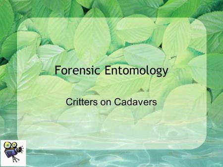 Forensic Entomology Critters on Cadavers. What do Forensic Entomologists Do? Forensic Entomologists apply their knowledge of entomology to provide.