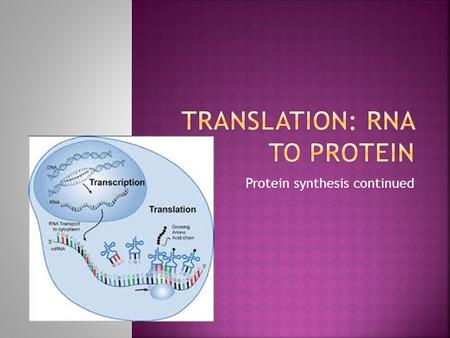 Protein synthesis continued.  Transcription is step 1  DNA  mRNA  Nucleus  RNA polymerase.