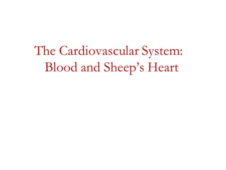 The Cardiovascular System: Blood and Sheep's Heart.