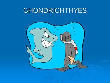 CHONDRICHTHYES. COMPARING FISH TO FISH  OSTEICHTHYES  CHONDRICHTHYES  BONY  SINGLE GILL OPENING  SINGLE ROW OF TEETH  SCALES  SWIM BLADDER 