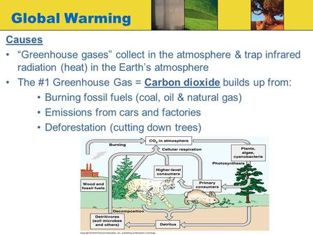 "Global Warming Causes ""Greenhouse gases"" collect in the atmosphere & trap infrared radiation (heat) in the Earth's atmosphere The #1 Greenhouse Gas = Carbon."