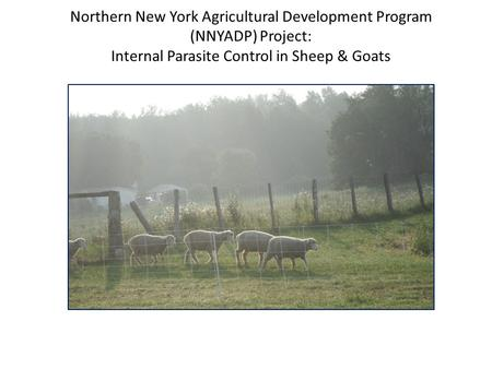 Northern New York Agricultural Development Program (NNYADP) Project: Internal Parasite Control in Sheep & Goats.