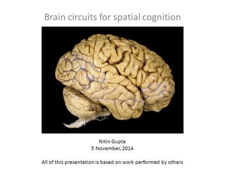 Brain circuits for spatial cognition Nitin Gupta 5 November, 2014 All of this presentation is based on work performed by others.