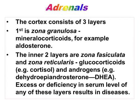 The cortex consists of 3 layers 1 st is zona granulosa - mineralocorticoids, for example aldosterone. The inner 2 layers are zona fasiculata and zona reticularis.