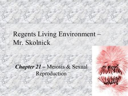 Regents Living Environment – Mr. Skolnick Chapter 21 – Meiosis & Sexual Reproduction.