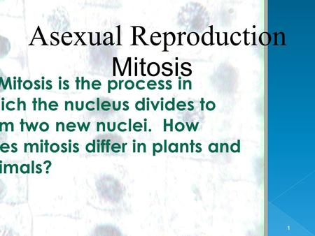 1 1 Asexual Reproduction Mitosis EQ: Mitosis is the process in which the nucleus divides to form two new nuclei. How does mitosis differ in plants and.