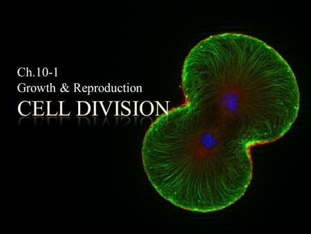 Ch.10-1 Growth & Reproduction. POINT > Consider limits to cell size POINT > Define cell division POINT > Describe asexual reproduction POINT > Describe.