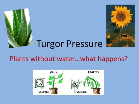 Plants without water…what happens?