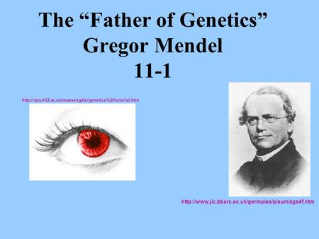 "The ""Father of Genetics"" Gregor Mendel 11-1"