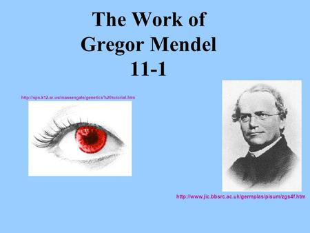 The Work of Gregor Mendel 11-1