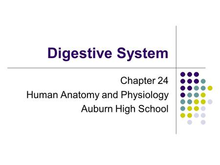 Digestive System Chapter 24 Human Anatomy and Physiology Auburn High School.