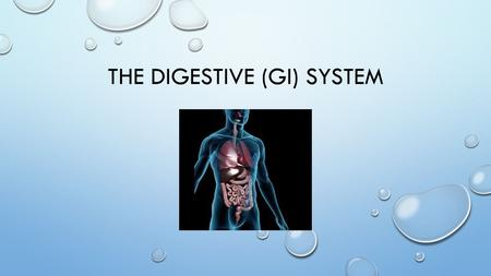 "THE DIGESTIVE (GI) SYSTEM. THE DIGESTIVE SYSTEM IS ALSO KNOWN AS THE ""GI— GASTROINTESTINAL SYSTEM"" IT IS RESPONSIBLE FOR THE PHYSICAL AND CHEMICAL BREAKDOWN."