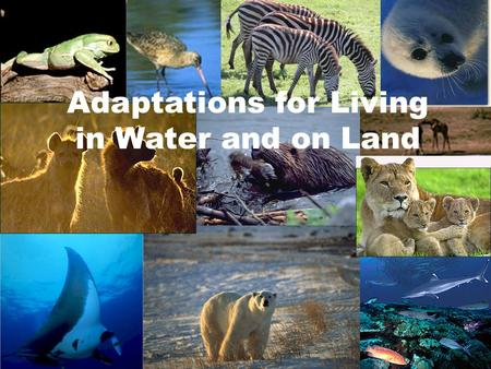 Adaptations for Living in Water and on Land. What are some basic needs of sea creatures? Find Food Avoid being eaten by predators Attract a mate to reproduce.