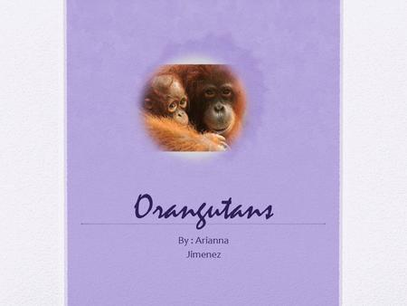 Orangutans By : Arianna Jimenez. Adaptations An orangutans adaptations are to swing on tress with there long arms. That's how they build strength.