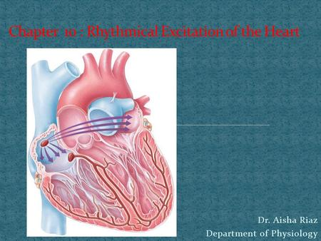 Dr. Aisha Riaz Department of Physiology. parts of the heart normally beat in orderly sequence contraction of the atria (atrial systole) is followed by.