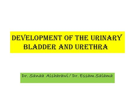 Development of the urinary bladder and urethra Dr. Sanaa Alsharawi / Dr. Essam Salama.