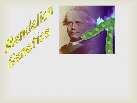 "Gregor Mendel : Known as ""THE FATHER OF GENETICS"". - laid the foundations for the SCIENCE OF GENETICS through his study of inheritance patterns of traits."