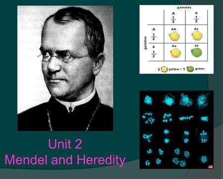 Unit 2 Mendel and Heredity. Unit 2 - Mendelian Genetics (Ch. 10 & 12) 1.Define Genetics & Heredity 2.Interpret a pedigree with inherited traits 3.Identify.