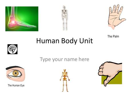 Human Body Unit Type your name here. Models of Muscles Use these to answer the questions on slides 3, 4, and 5.