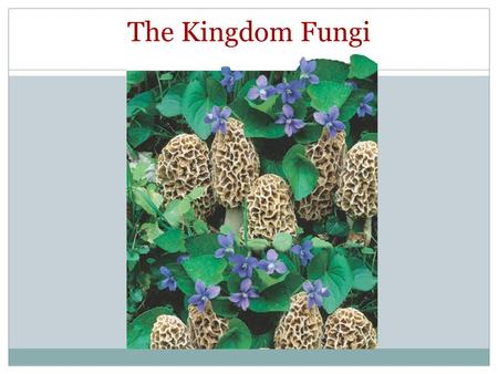 The Kingdom Fungi Photo Credit: ©D. Cavagnaro/DRK Photo.