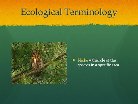 Ecological Terminology Niche = the role of the species in a specific area Niche = the role of the species in a specific area.