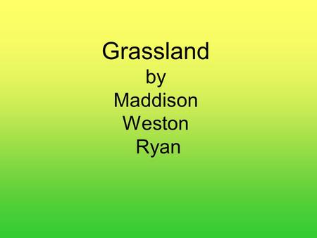 Grassland by Maddison Weston Ryan. Grassland Facts A grassland is a windy, partly dry sea of grass. Grasslands cover nearly 1/4 of earth's land area.