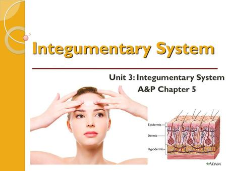Integumentary System Unit 3: Integumentary System A&P Chapter 5.