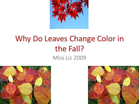 Why Do Leaves Change Color in the Fall? Miss Liz 2009.