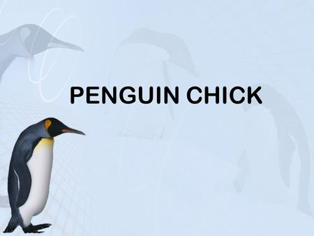 PENGUIN CHICK. OBJECTIVES TODAY WE WILL…. Use main idea and details to summarize a passage Identify unstated main idea and details in a paragraph Use.