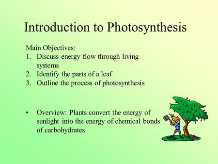 Introduction to Photosynthesis Main Objectives: 1.Discuss energy flow through living systems 2.Identify the parts of a leaf 3.Outline the process of photosynthesis.