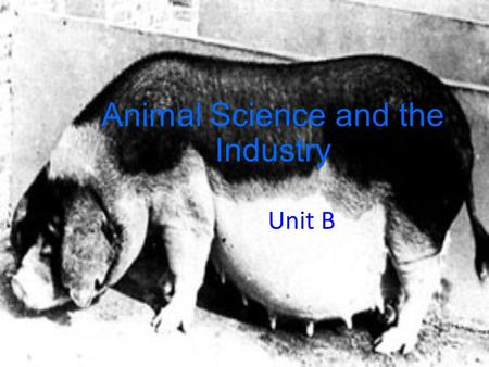 Animal Science and the Industry Unit B. Identifying and Understanding the Segments of the Animal Science Industry Problem Area 2.