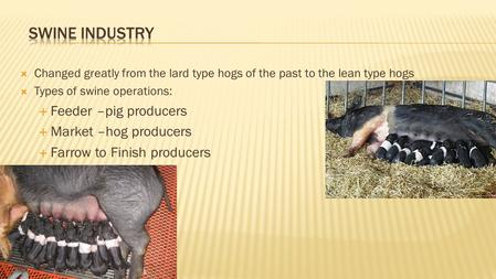  Changed greatly from the lard type hogs of the past to the lean type hogs  Types of swine operations:  Feeder –pig producers  Market –hog producers.