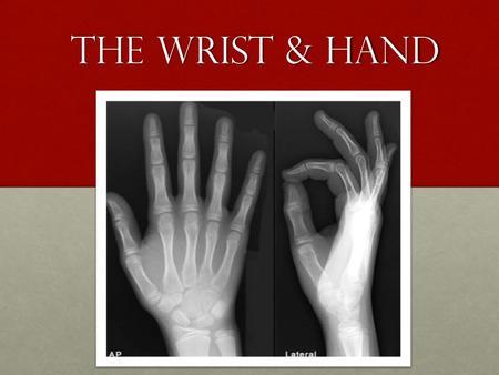 The wrist & hand. The wrist/hand: Terms Remember to use the anatomical position when referring to directional terminology of the wrist/hand.Remember to.