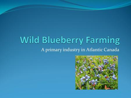 A primary industry in Atlantic Canada. What is Wild Blueberry Farming? Wild Blueberries are a fruit that is grown naturally. Wild blueberries are also.