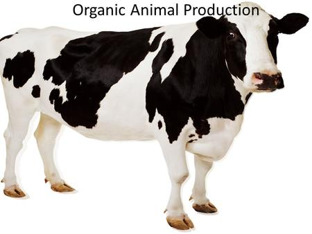 Organic Animal Production. Jude Maul Nick Marvell Heather Darby Patricia Milner.