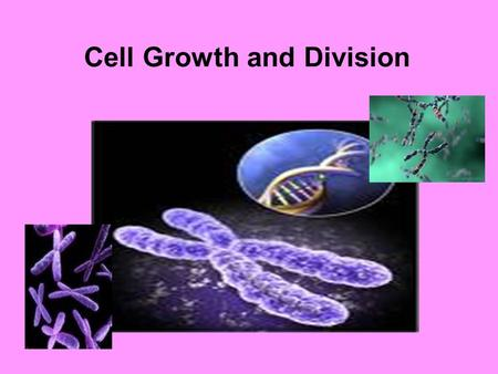 Cell Growth and Division. Growth vs. Division When an animal or plant grows, what happens to its cells? Does an animal get larger because each cell increases.