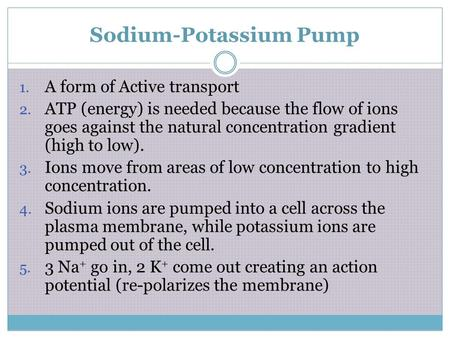 Sodium-Potassium Pump 1. A form of Active transport 2. ATP (energy) is needed because the flow of ions goes against the natural concentration gradient.