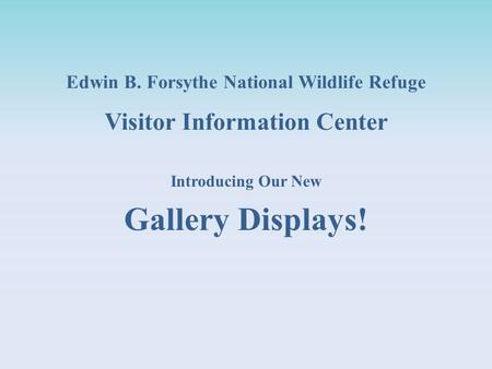 Edwin B. Forsythe National Wildlife Refuge Visitor Information Center Introducing Our New Gallery Displays!